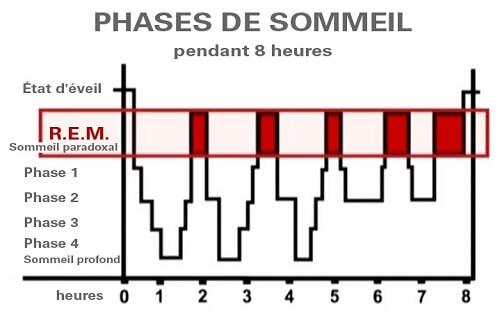 Les phases du sommeil - literie privée paris